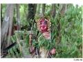032enbaladekoitakkararey_india2011-aout