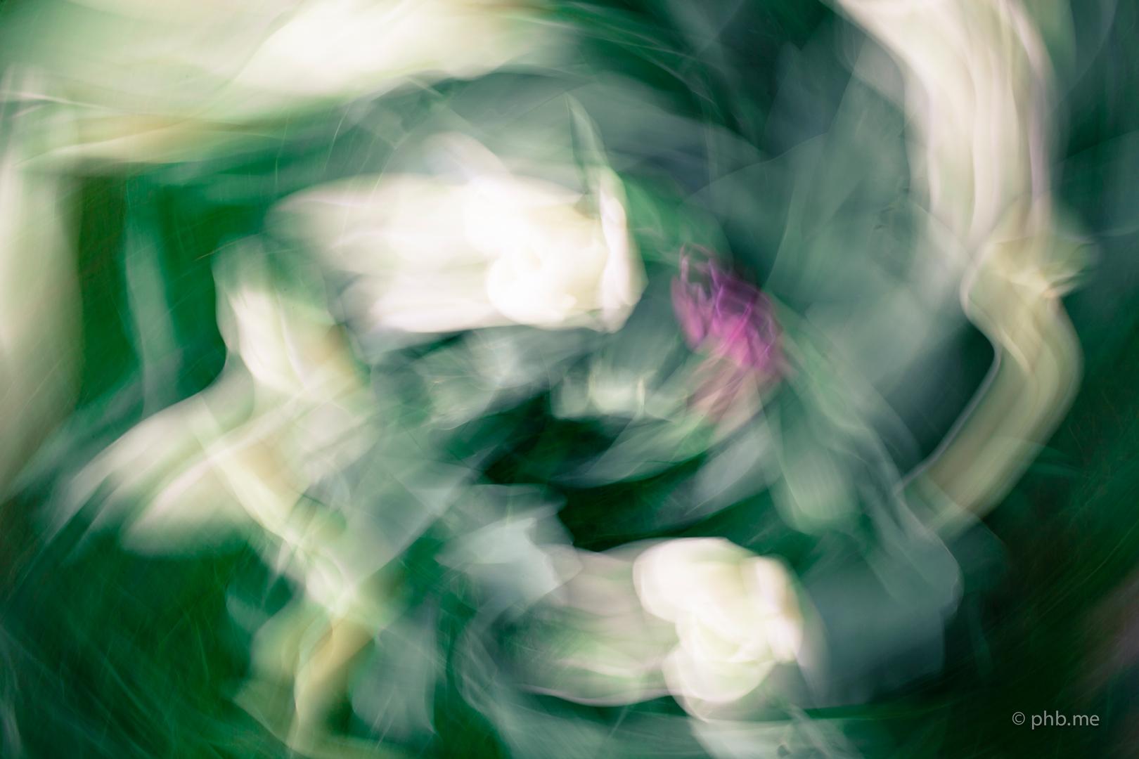 phb.me-n&b-huchot-2014-Painting-Photo-Montauban-garden-IMG_3830