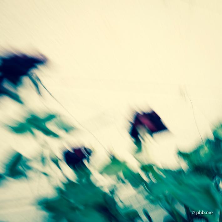 IMG_5942-phb