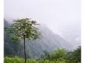 wudangshan01-arbre